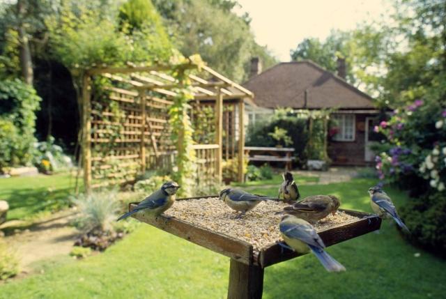 BirdGardening, come creare un giardino a misura di uccelli selvatici