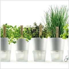 Piante e Arredamento: Arredare casa con le piante